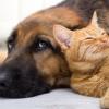 لا أزمة في صناعات أغذية الكلاب والقطط (تحقيق)