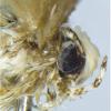 علوم: حشرة اسمها دونالد ترامب
