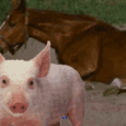 حذار اللحوم المستوردة