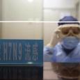 فيروس انفلونزا H7N9 ينتقل للبشر