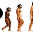 السلالة البشرية انفصلت عن الشمبانزي في المتوسط