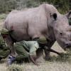 وداعاً يا «سودان» آخر ذكر وحيد القرن