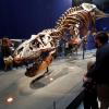 باريس: عرض ديناصور عمره 67 مليون عام
