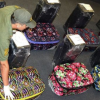 الأرجنتين: ١٢ حقيبة معبئة كوكايين في السفارة الروسية