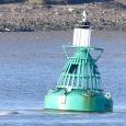 ロンドンに近いテムズ川にシロイルカ現る、通常は北極海に生息