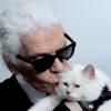 قطة لاغرفيلد ترث ١٩٥ مليون دولار