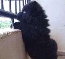 عائلة تخاف من كلبها «ليتل بلاك»